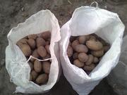 Картофель крупный в мешках. Недорого. Урожай сентябрь 2017 г.